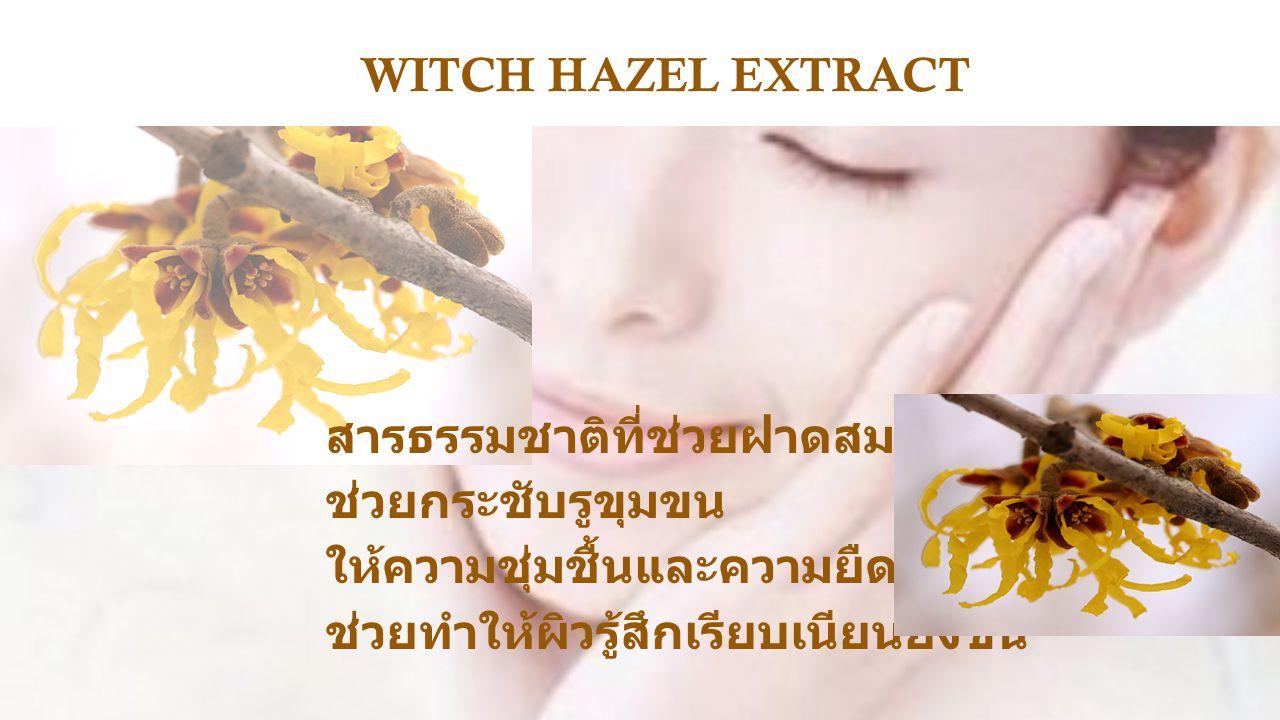 Witch Hazel Extract สารธรรมชาติที่ช่วยฝาดสมานผิว. ช่วยกระชับรูขุมขน. ให้ความชุ่มชื้นและความยืดหยุ่นแก่ผิว.