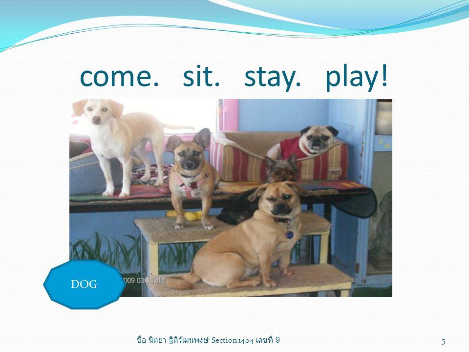 come. sit. stay. play! DOG ชื่อ นิตยา ฐิติวัฒนพงษ์ Section 1404 เลขที่ 9