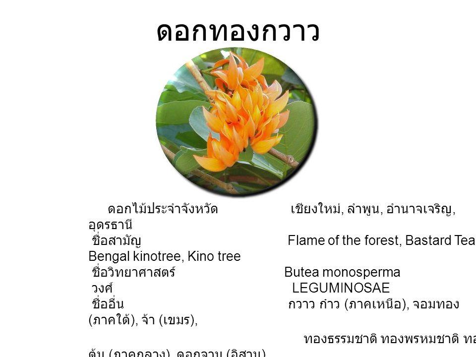 ดอกทองกวาว