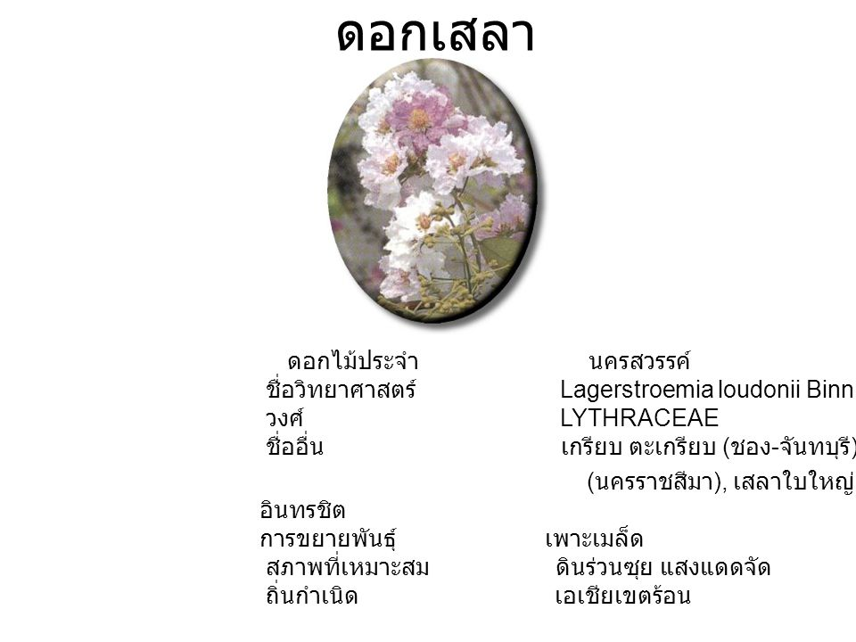 ดอกเสลา