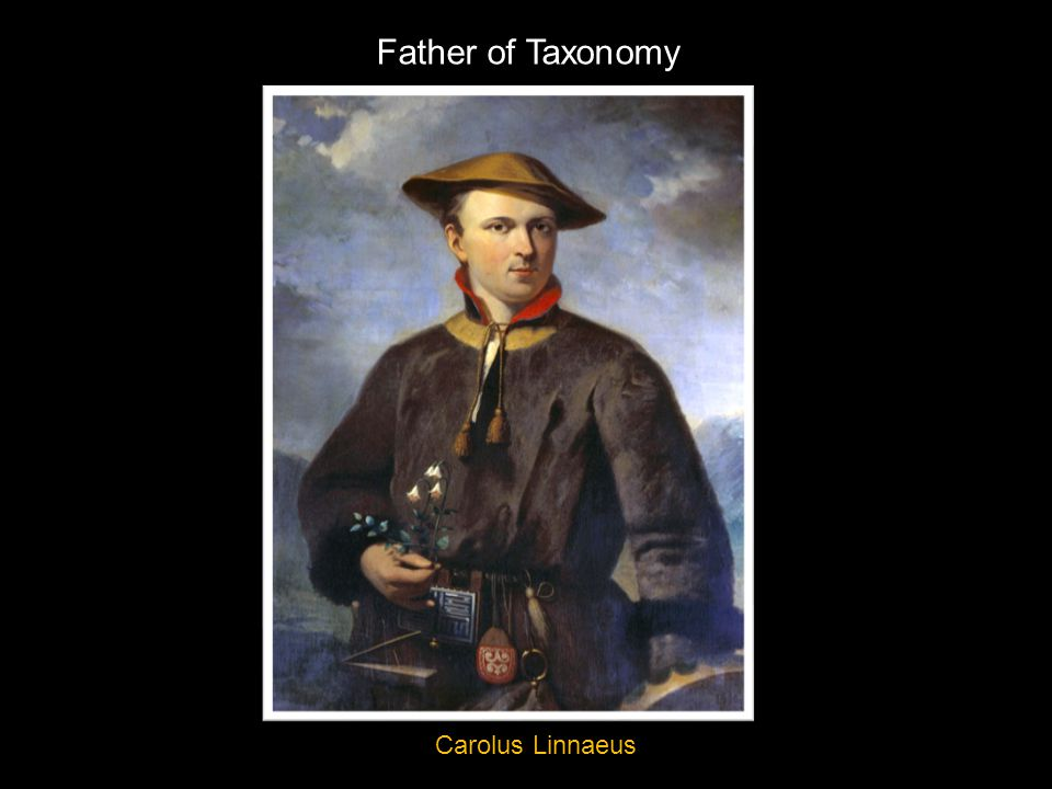 Father of Taxonomy Carolus Linnaeus