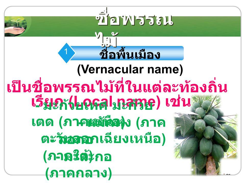 ชื่อพื้นเมือง (Vernacular name)