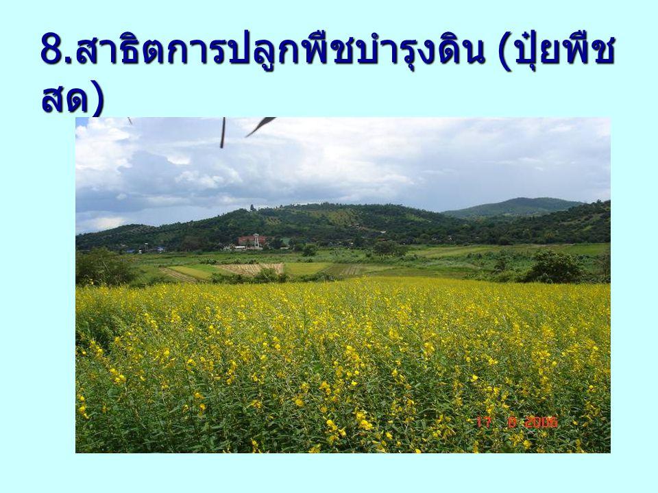 8.สาธิตการปลูกพืชบำรุงดิน (ปุ๋ยพืชสด)