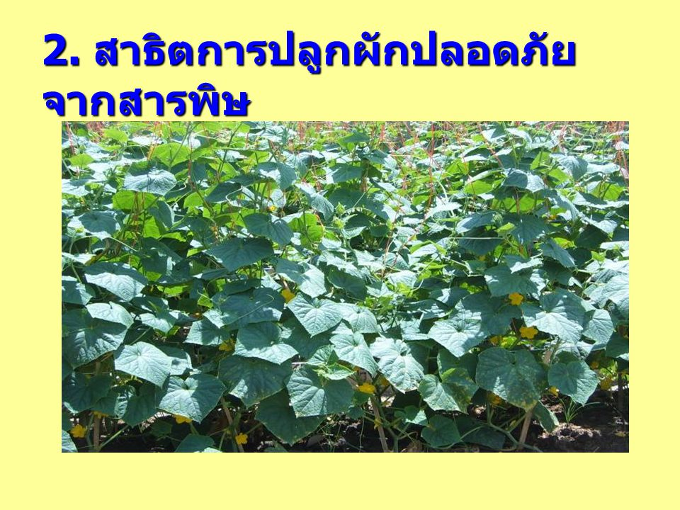 2. สาธิตการปลูกผักปลอดภัยจากสารพิษ