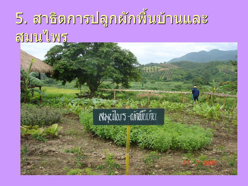 5. สาธิตการปลูกผักพื้นบ้านและสมุนไพร