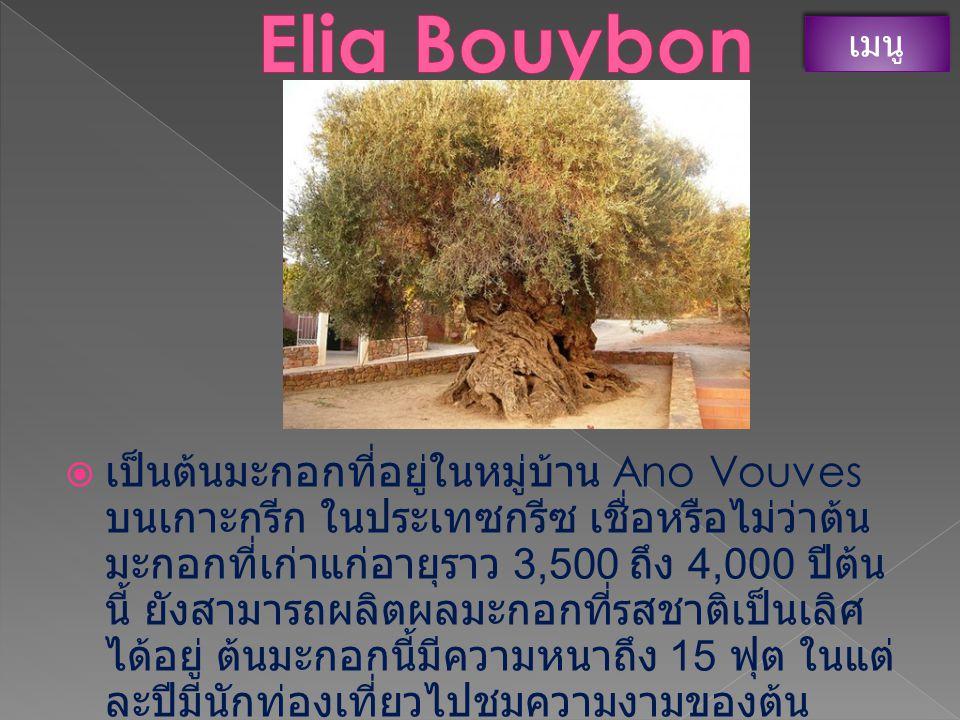 Elia Bouybon เมนู