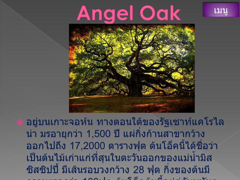 Angel Oak เมนู