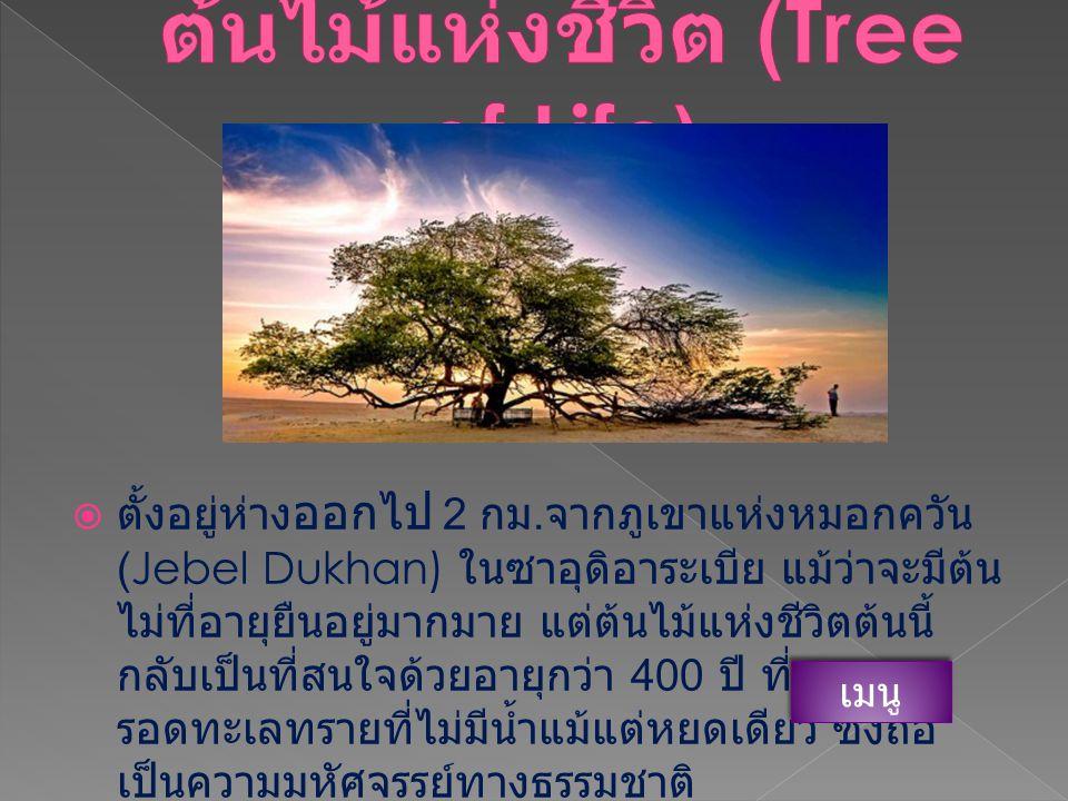 ต้นไม้แห่งชีวิต (Tree of Life)