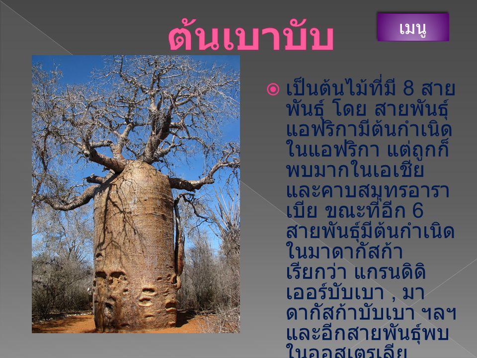 ต้นเบาบับ เมนู