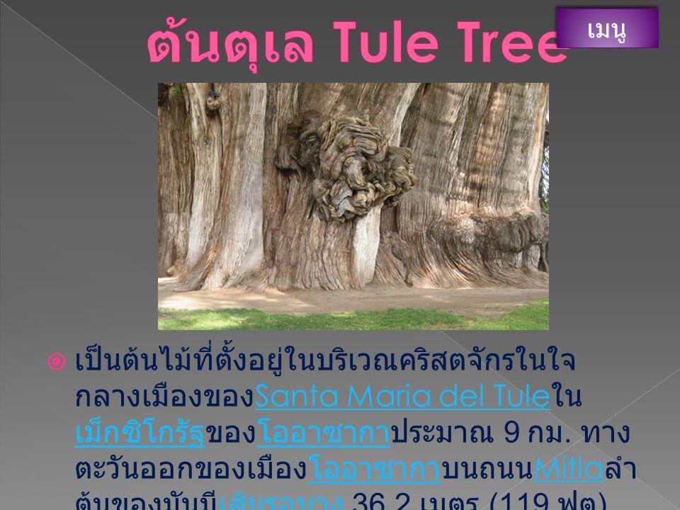 ต้นตุเล Tule Tree เมนู