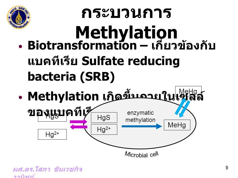 กระบวนการ Methylation