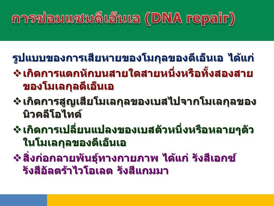 การซ่อมแซมดีเอ็นเอ (DNA repair)