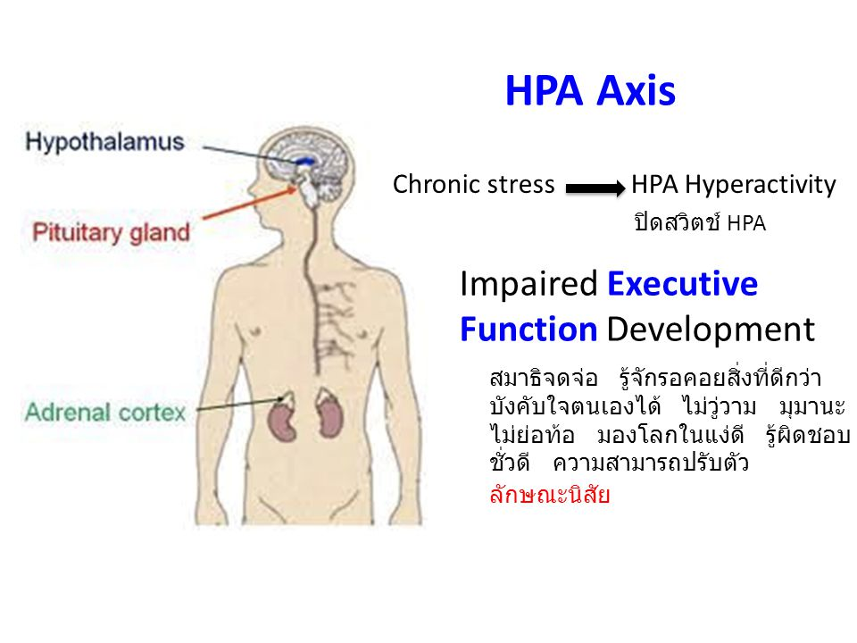 HPA Axis Impaired Executive Function Development