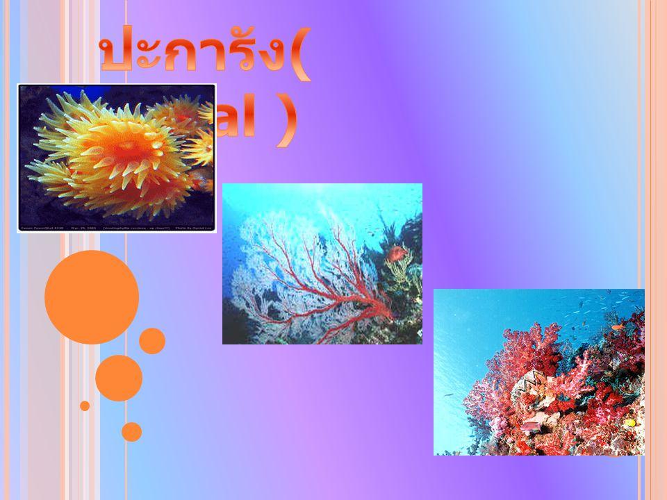 ปะการัง( Coral )
