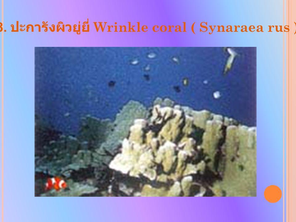 8. ปะการังผิวยู่ยี่ Wrinkle coral ( Synaraea rus )