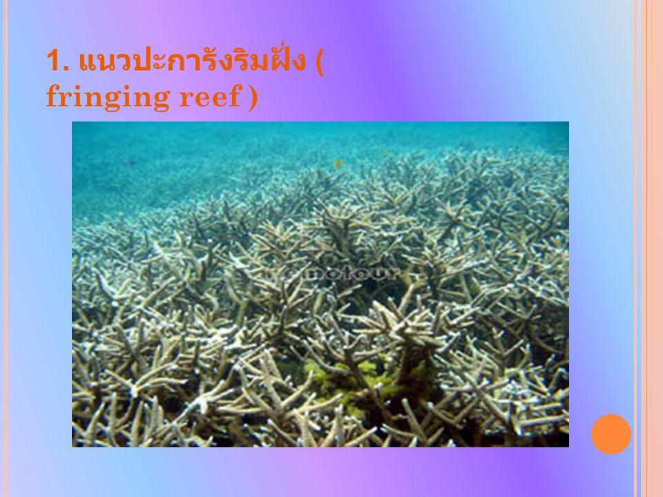 1. แนวปะการังริมฝั่ง ( fringing reef )