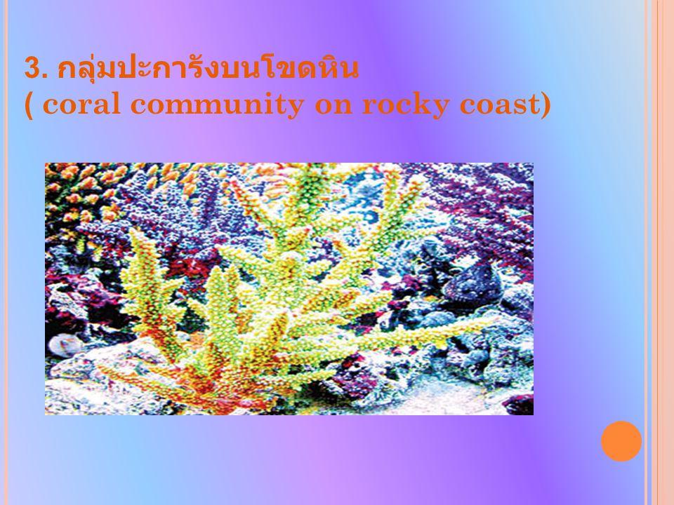 3. กลุ่มปะการังบนโขดหิน