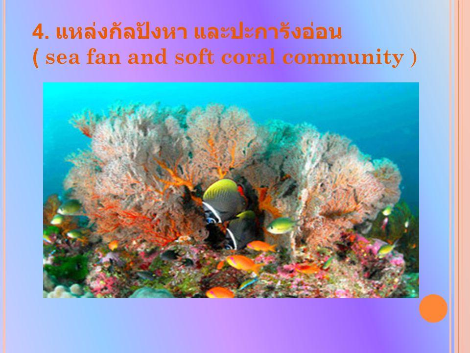 4. แหล่งกัลปังหา และปะการังอ่อน