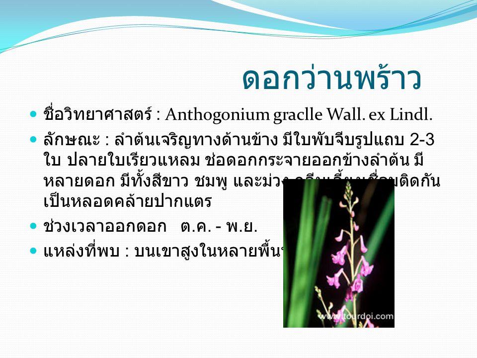 ดอกว่านพร้าว ชื่อวิทยาศาสตร์ : Anthogonium graclle Wall. ex Lindl.