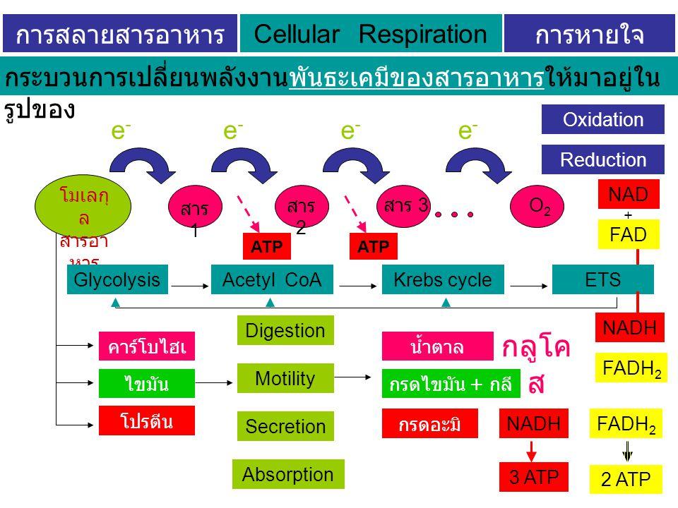 การสลายสารอาหารระดับเซลล์