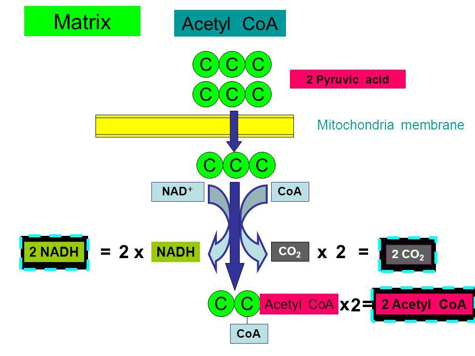 Matrix Acetyl CoA C C C C C C C C C = 2 x x 2 = C C x 2 =