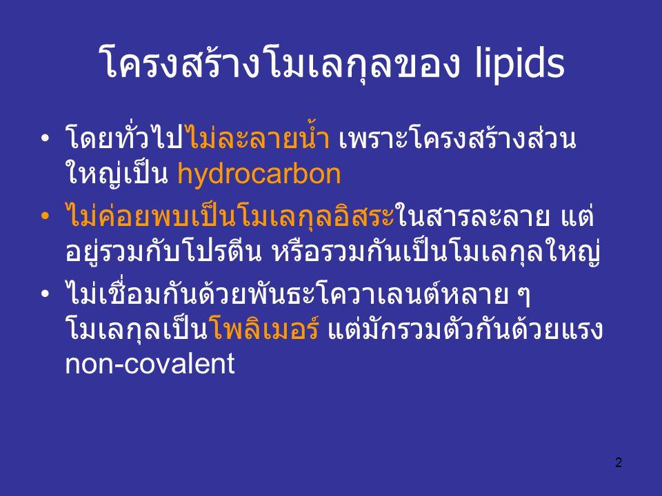 โครงสร้างโมเลกุลของ lipids