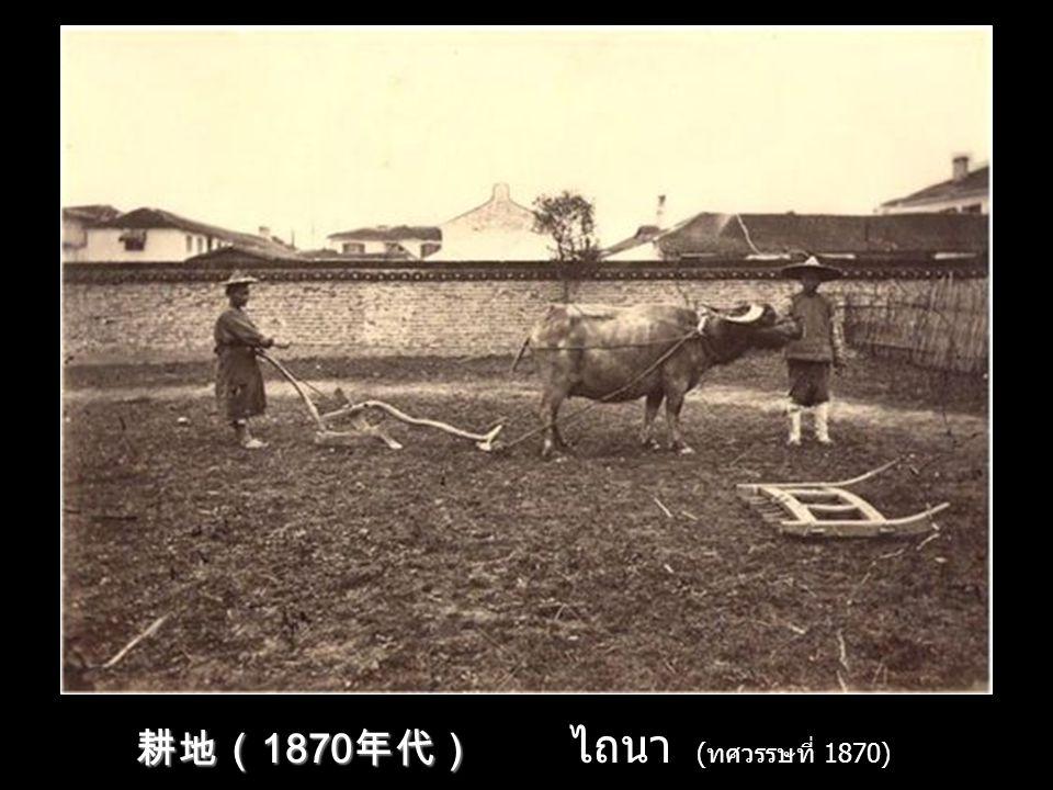 耕地(1870年代) ไถนา (ทศวรรษที่ 1870)