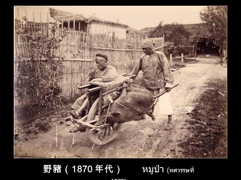 野豬(1870 年代) หมูป่า (ทศวรรษที่ 1870)