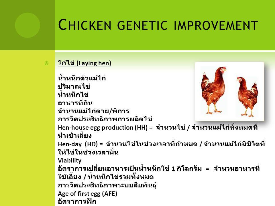 Chicken genetic improvement