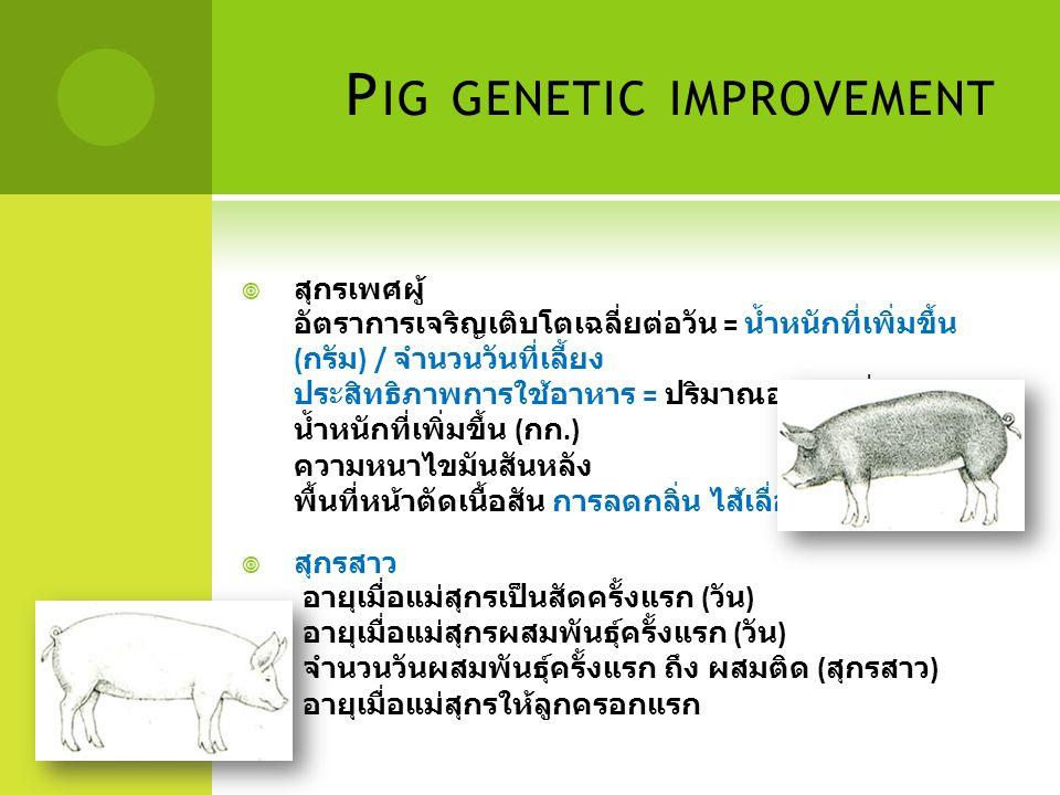 Pig genetic improvement