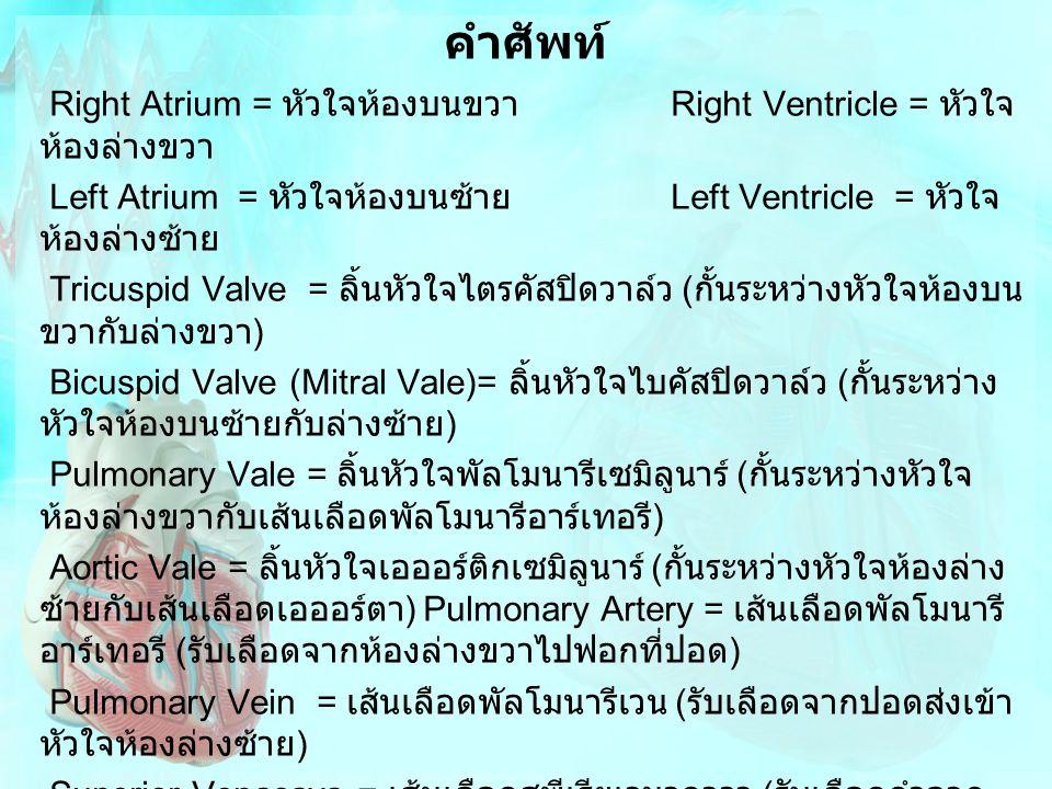 คำศัพท์ Right Atrium = หัวใจห้องบนขวา Right Ventricle = หัวใจห้องล่างขวา. Left Atrium = หัวใจห้องบนซ้าย Left Ventricle = หัวใจห้องล่างซ้าย.