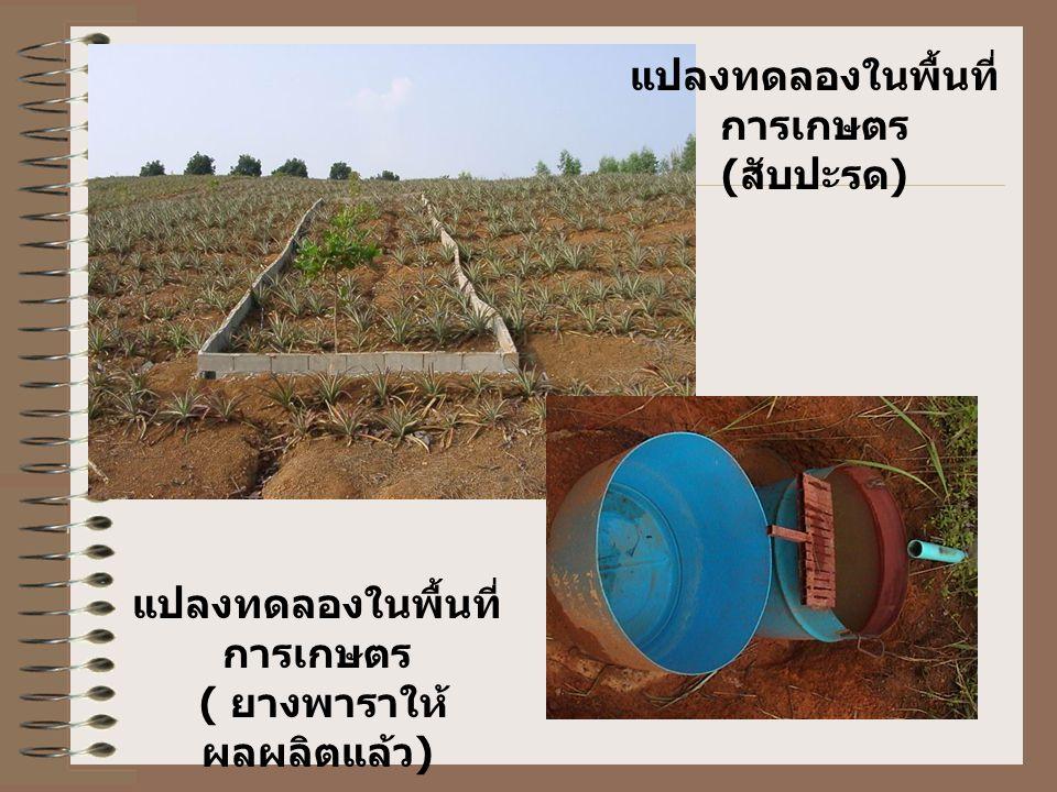 แปลงทดลองในพื้นที่การเกษตร (สับปะรด)