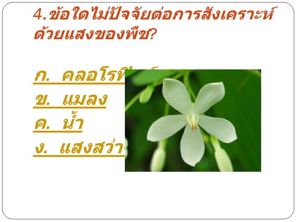 4.ข้อใดไม่ปัจจัยต่อการสังเคราะห์ด้วยแสงของพืช