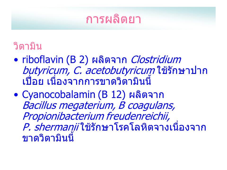 การผลิตยา วิตามิน. riboflavin (B 2) ผลิตจาก Clostridium butyricum, C. acetobutyricum ใช้รักษาปากเปื่อย เนื่องจากการขาดวิตามินนี้