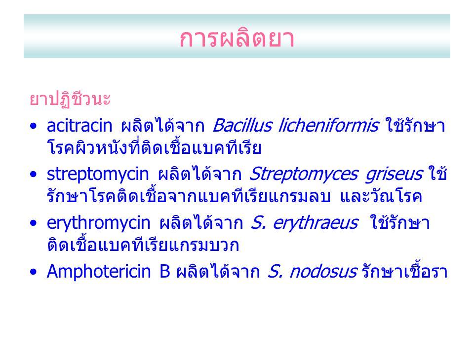 การผลิตยา ยาปฏิชีวนะ. acitracin ผลิตได้จาก Bacillus licheniformis ใช้รักษาโรคผิวหนังที่ติดเชื้อแบคทีเรีย.