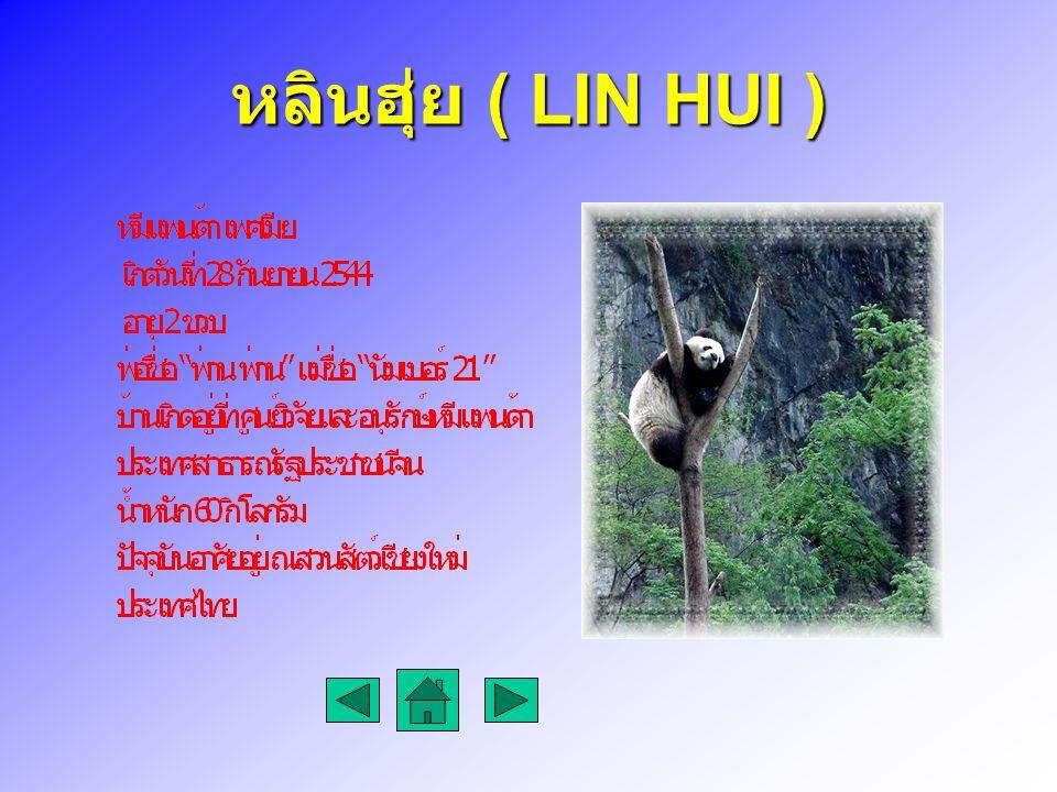 หลินฮุ่ย ( LIN HUI )