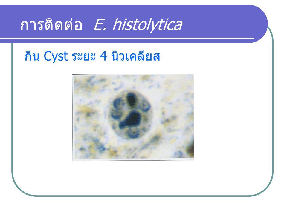 การติดต่อ E. histolytica