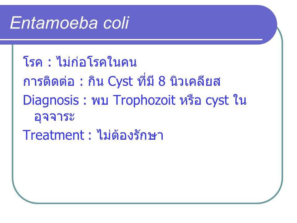 Entamoeba coli โรค : ไม่ก่อโรคในคน