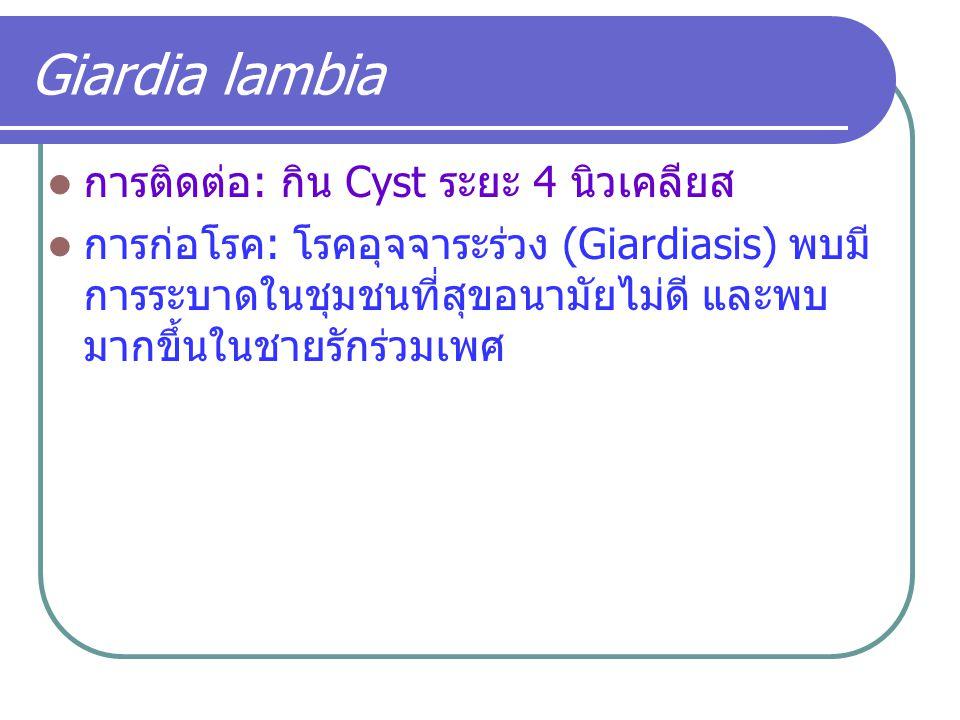 Giardia lambia การติดต่อ: กิน Cyst ระยะ 4 นิวเคลียส