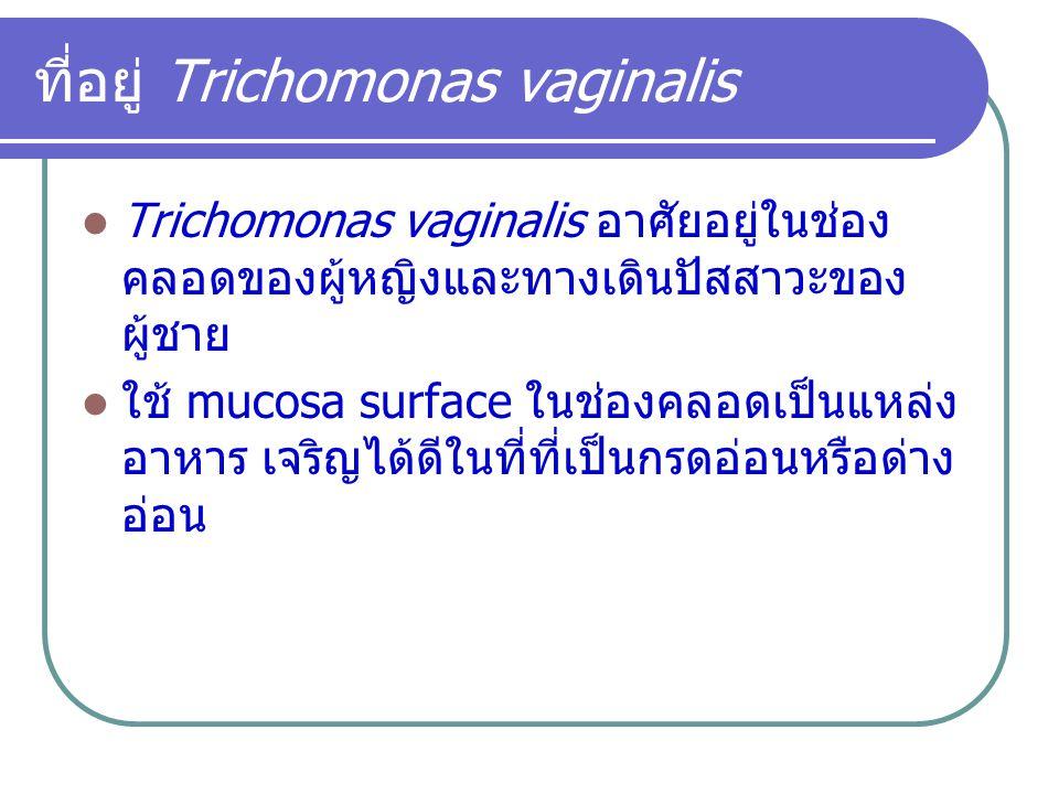 ที่อยู่ Trichomonas vaginalis