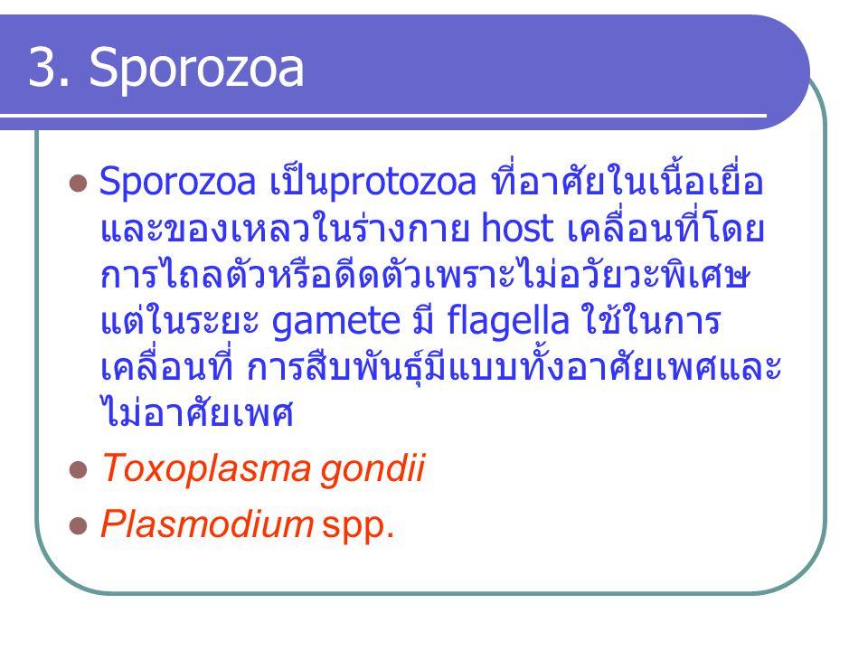 3. Sporozoa