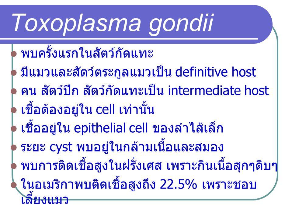 Toxoplasma gondii พบครั้งแรกในสัตว์กัดแทะ