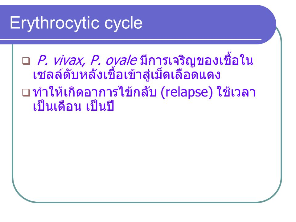 Erythrocytic cycle P. vivax, P. ovale มีการเจริญของเชื้อในเซลล์ตับหลังเชื้อเข้าสู่เม็ดเลือดแดง.