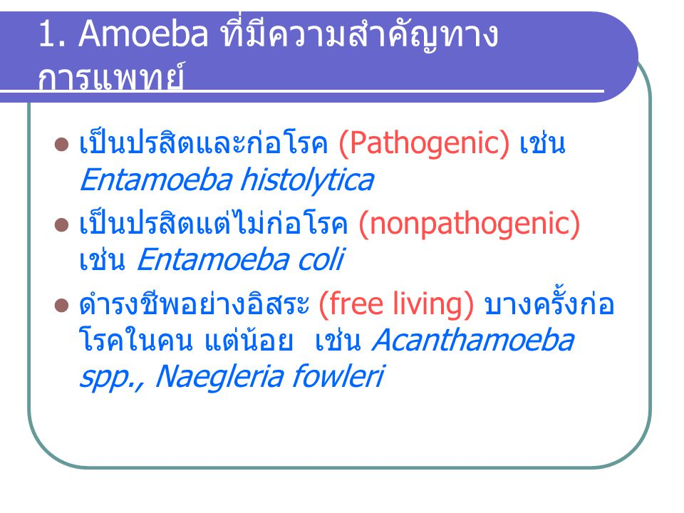 1. Amoeba ที่มีความสำคัญทางการแพทย์