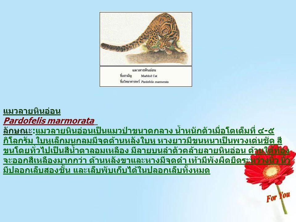 แมวลายหินอ่อน Pardofelis marmorata