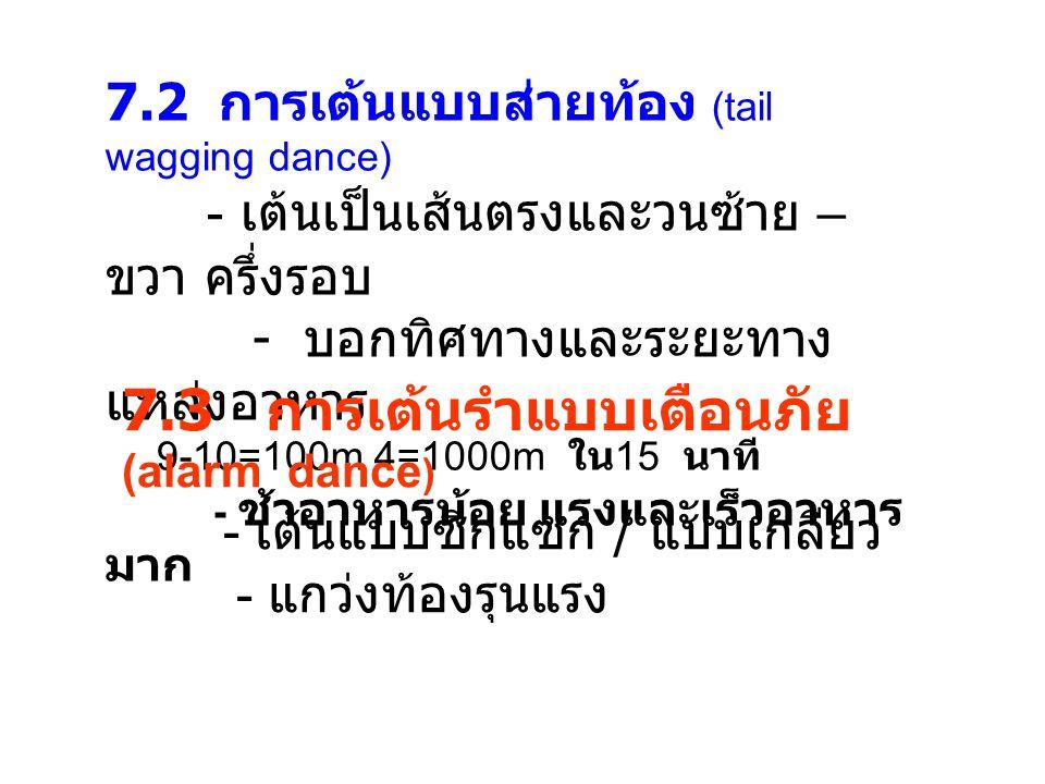 7.3 การเต้นรำแบบเตือนภัย (alarm dance)