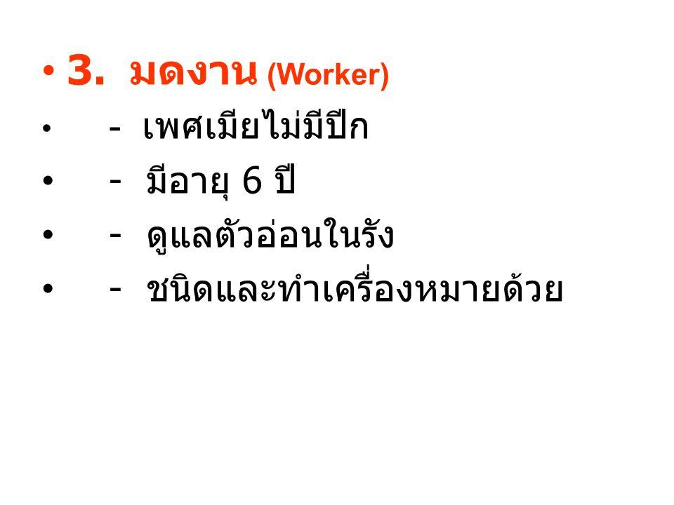 3. มดงาน (Worker) - มีอายุ 6 ปี - ดูแลตัวอ่อนในรัง