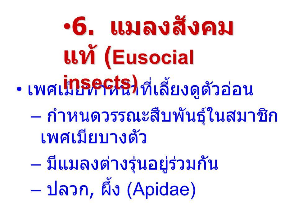 6. แมลงสังคมแท้ (Eusocial insects)