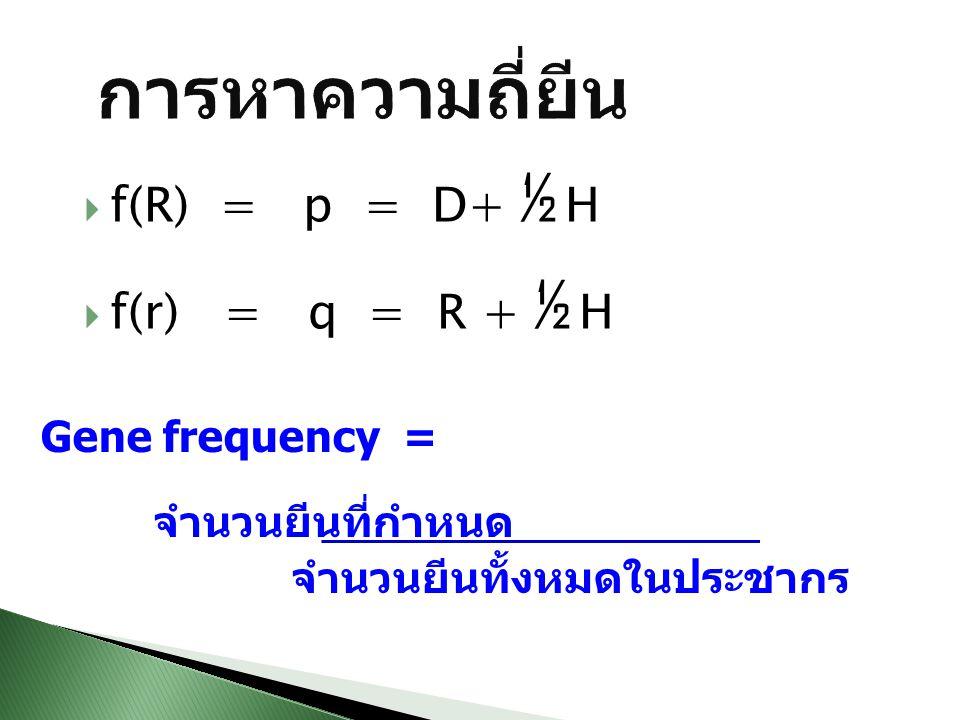 การหาความถี่ยีน f(R) = p = D+ ½ H f(r) = q = R + ½ H Gene frequency =