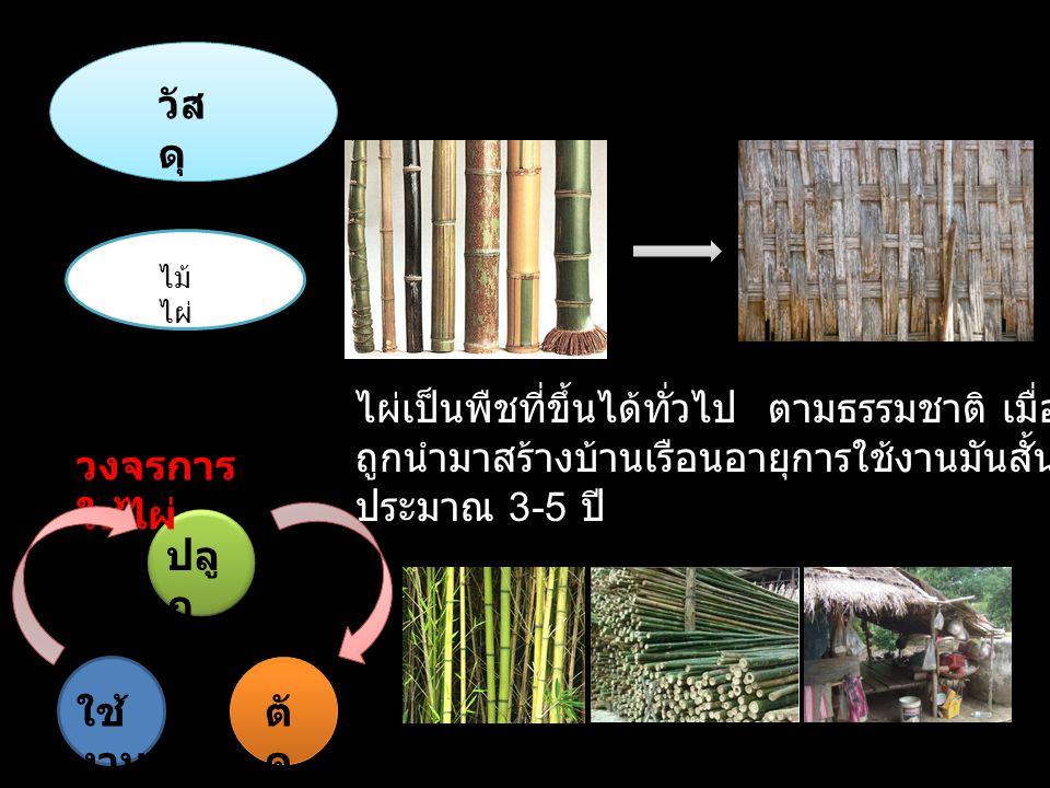 วัสดุ ไม้ไผ่ ไผ่เป็นพืชที่ขึ้นได้ทั่วไป ตามธรรมชาติ เมื่อถูกนำมาสร้างบ้านเรือนอายุการใช้งานมันสั้นประมาณ 3-5 ปี